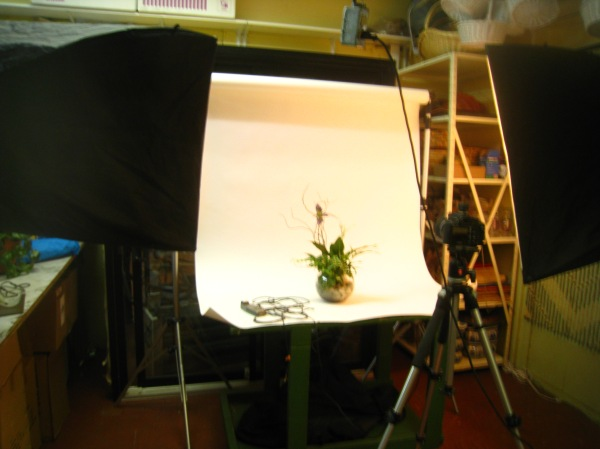 Montreal Flowers Photo Studio